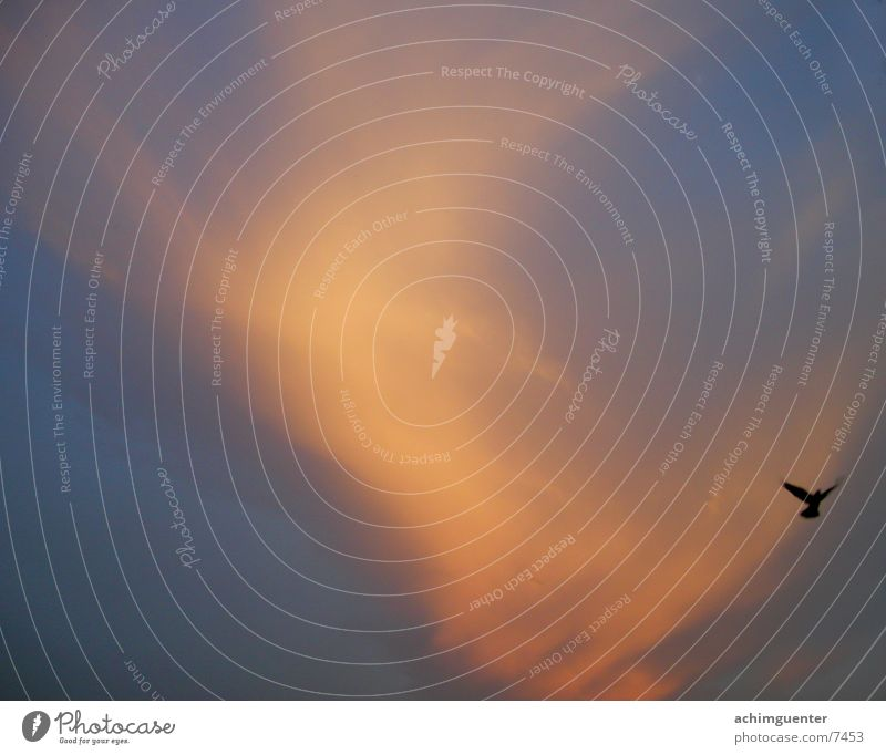 Red SKY Himmel blau Wolken orange Vogel Wind Wetter Abenddämmerung