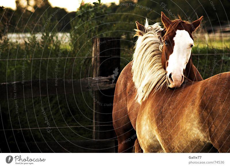 unzertrennlich Sommer Wiese Haare & Frisuren Freundschaft Zusammensein Rücken Pferd nah Schutz Freundlichkeit Weide Abschied Geborgenheit Zuneigung Mähne