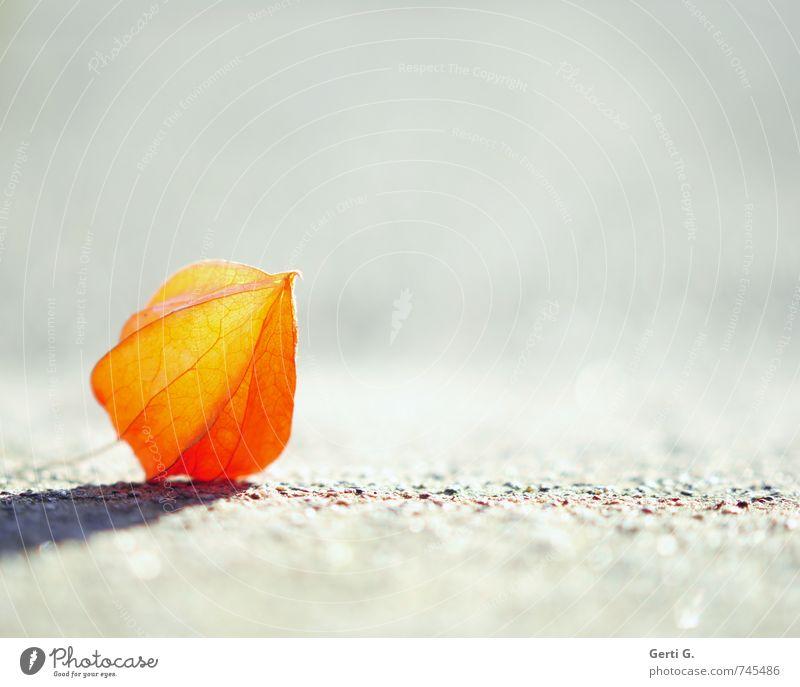 klEin und allEin Natur Einsamkeit gelb Gefühle klein natürlich hell liegen orange elegant leuchten einzeln frisch Spitze einfach nah