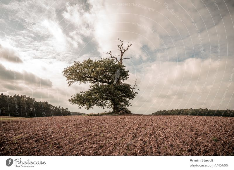 1000jährige Eiche Himmel Natur alt Sommer Baum Landschaft Umwelt Frühling Stimmung Horizont Deutschland Erde Feld groß authentisch Europa