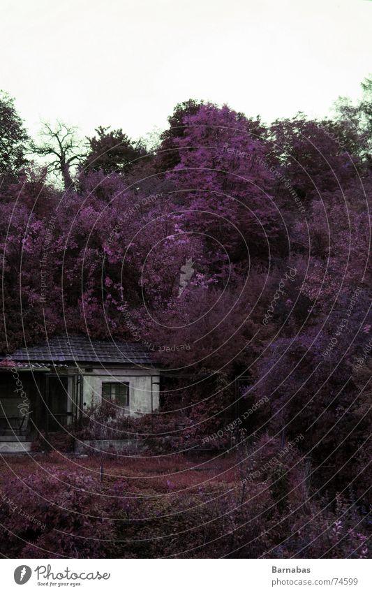 Autumn Natur alt Baum Haus Farbe Herbst frei kaputt violett verfallen Hut Wildtier Hütte standhaft Collage nachbearbeitet