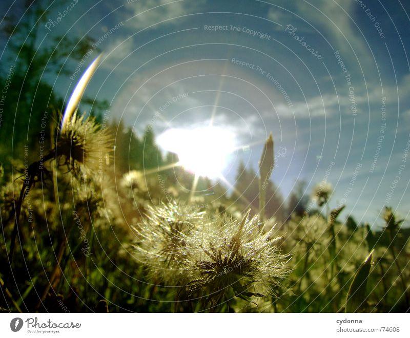 Voll geblendet Sonnenstrahlen Strahlung blenden Froschperspektive Wiese Hügel Sommer Gras Wolken schön Idylle unberührt Physik Aktion grün