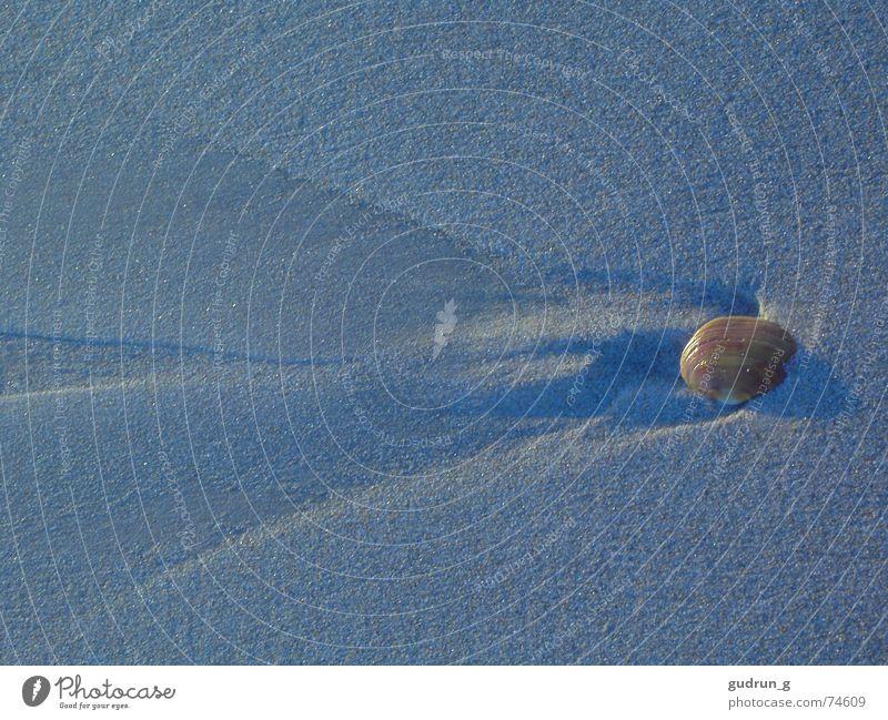 Ein Tag am Meer blau Strand Leben Stein Fluss Frankreich Muschel