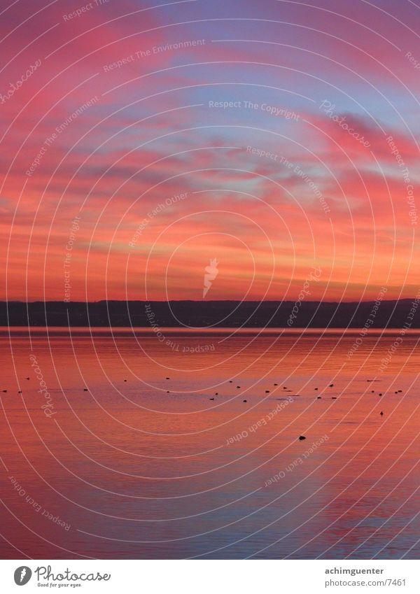 See am Abend Horizont Romantik ruhig Abenddämmerung Wasser Bodensee Himmel Küste orange