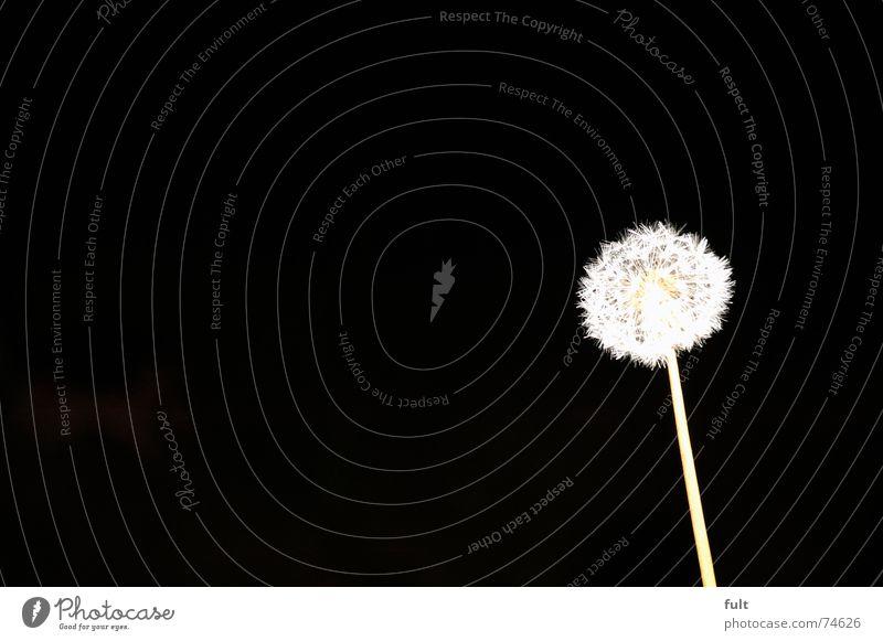 pusteblume 4 weiß ruhig schwarz Wind fliegen Löwenzahn blasen Dynamik Schwung