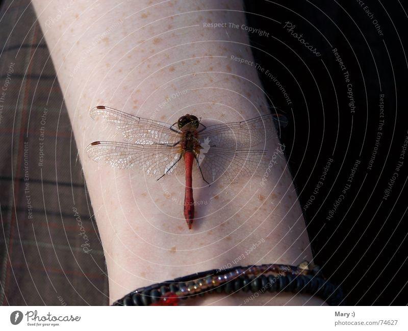 Sonnenbad im Oktober Mensch Natur Tier Herbst Arme Pause Libelle