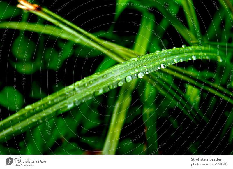 Tropfen Natur Wasser Blume grün Pflanze Gras Regen Wassertropfen Prima Grünpflanze