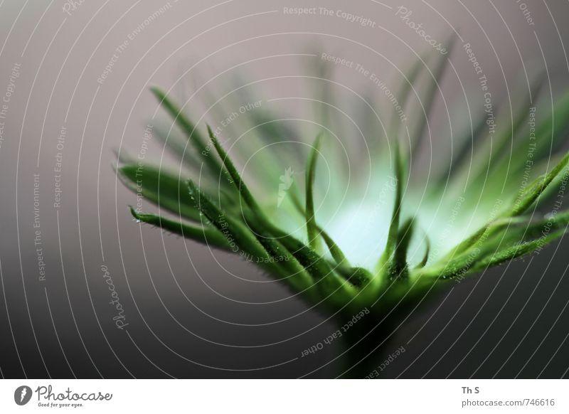 Frühling Natur schön grün Farbe Pflanze Sommer ruhig Umwelt natürlich elegant leuchten authentisch ästhetisch Energie fantastisch