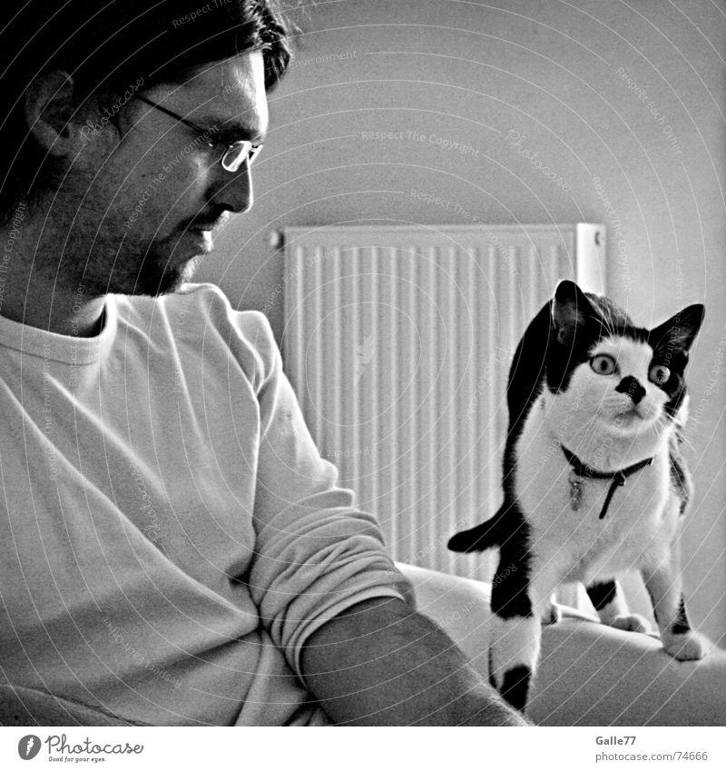 Mist... doch gesehen Mensch Freude lachen Katze lustig beobachten entdecken Gesichtsausdruck gefangen Überraschung erstaunt Schock Hauskatze