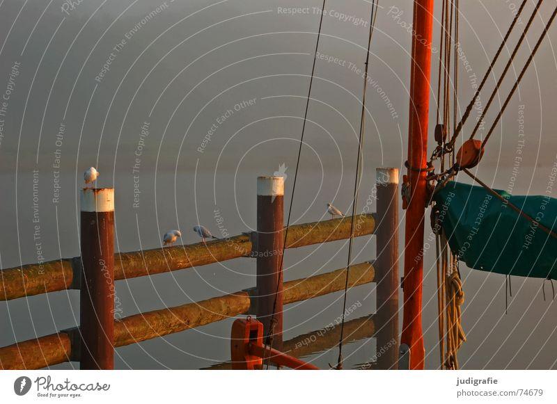 Morgens Natur Wasser ruhig Einsamkeit Herbst See Landschaft Wasserfahrzeug Stimmung Vogel Küste Nebel Seil Hafen Spiegel Steg