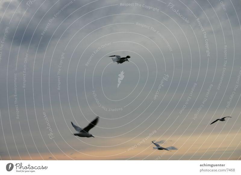 Frei Vogel Hoffnung Möwe Meer See Freiheit Himmel Abend Romatik
