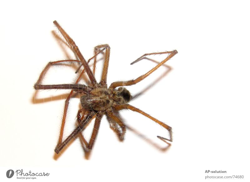 Pfui Spinne! Insekt Ekel Tier Makroaufnahme Nahaufnahme pfui 8 beine pics on white arachnaphobie