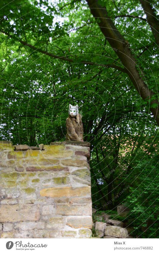 Mau Miau Mensch Junge Frau Jugendliche Erwachsene 1 Wald Menschenleer Burg oder Schloss Ruine Mauer Wand Pelzmantel Behaarung Tier Katze außergewöhnlich bizarr