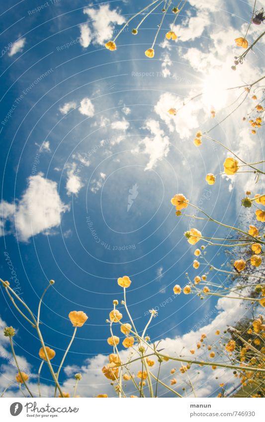 so will ich das Himmel Natur Ferien & Urlaub & Reisen blau Pflanze Sommer Sonne Erholung Blume Wolken gelb Umwelt Wiese Frühling Gras natürlich