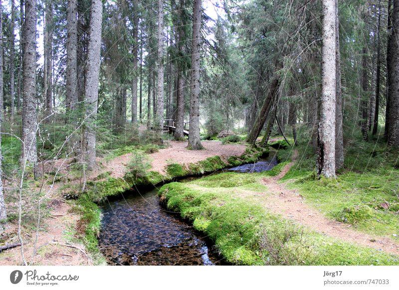 Waldbach Natur Wasser Pflanze Baum Frühling Erde Klima Fluss Bach Inspiration