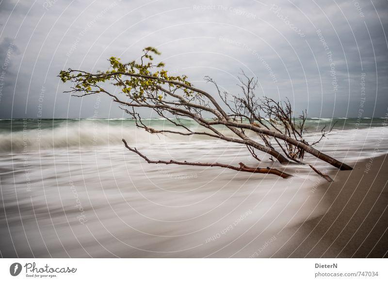 Frühling Strand Meer Wellen Sand Wasser Wolken Horizont Baum Küste Ostsee blau braun weiß Darß Weststrand Langzeitbelichtung Farbfoto Menschenleer