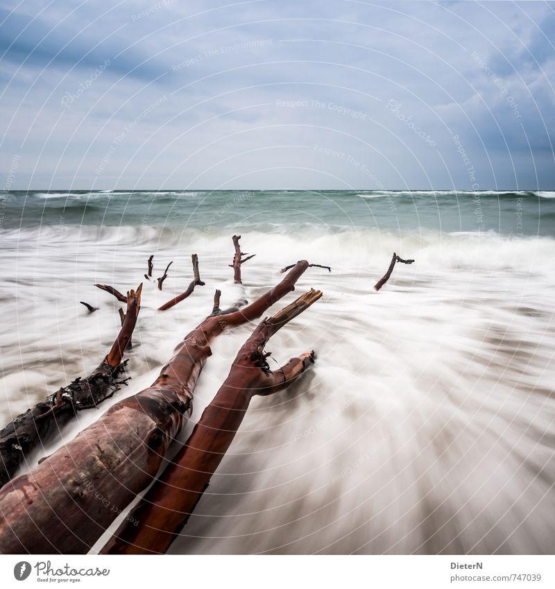 Gefallen Strand Meer Wellen Wasser Wolken Horizont Baum Küste Ostsee blau braun weiß Darß Weststrand Farbfoto Außenaufnahme Menschenleer Textfreiraum rechts