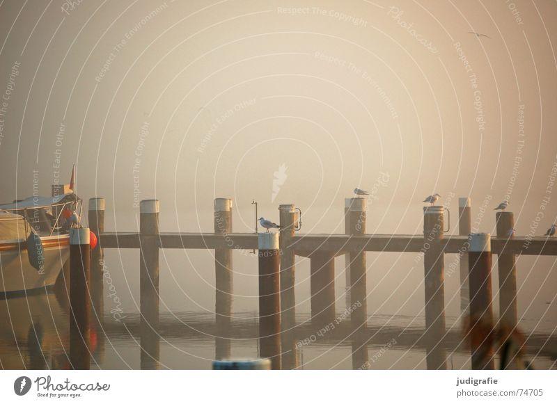 Nebel Natur Wasser ruhig Einsamkeit Herbst See Landschaft Wasserfahrzeug Stimmung Vogel Küste Hafen Spiegel Steg Anlegestelle