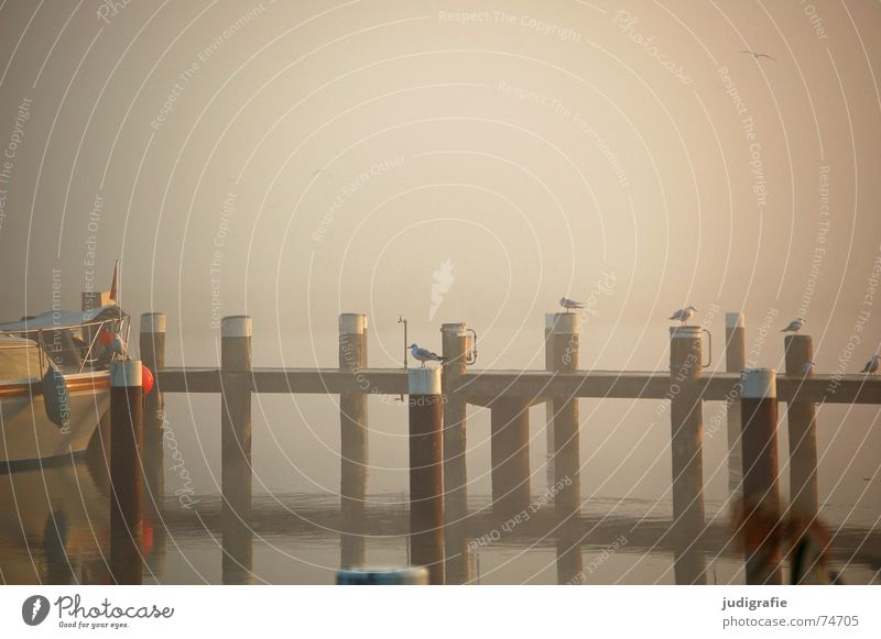 Nebel See Lachmöwe Morgen Wasserfahrzeug Steg ruhig Einsamkeit Stimmung Licht Sonnenaufgang Wasseroberfläche Spiegel Reflexion & Spiegelung Möwe Vogel Prerow