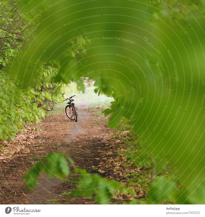 fahrt ins grüne Freizeit & Hobby Ferien & Urlaub & Reisen Tourismus Ausflug Abenteuer Ferne Freiheit Sommer Fahrrad Umwelt Natur Landschaft Pflanze Baum Blatt