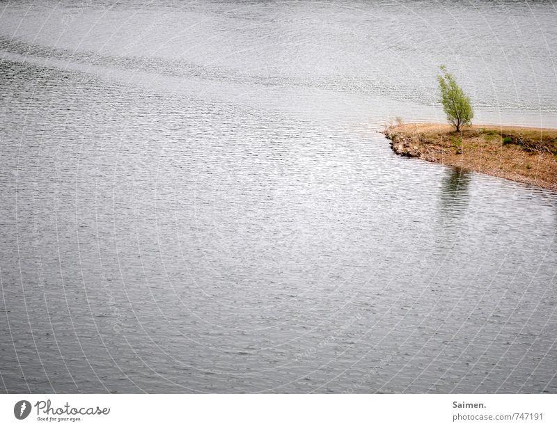 schiefstand Natur Landschaft Wasser Wachstum Baumstamm Sträucher Landzunge Neigung Reflexion & Spiegelung Wasseroberfläche Farbfoto Gedeckte Farben