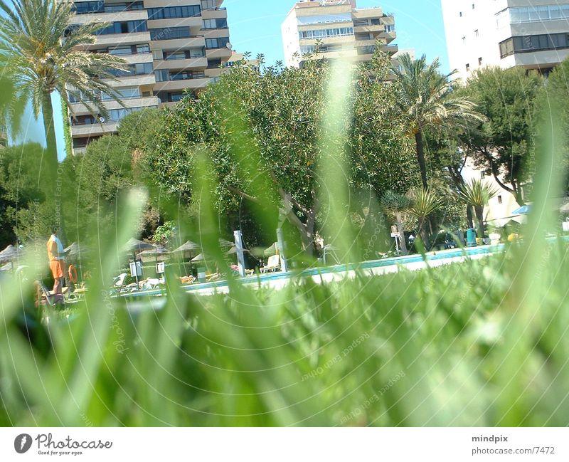 voyeursmus Wasser Sonne Sommer Schwimmbad beobachten verstecken