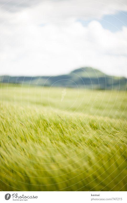 Kornkinder Himmel Natur Pflanze grün Sommer Landschaft Wolken Umwelt Berge u. Gebirge Frühling Feld Wachstum frisch Schönes Wetter Hügel Nutzpflanze