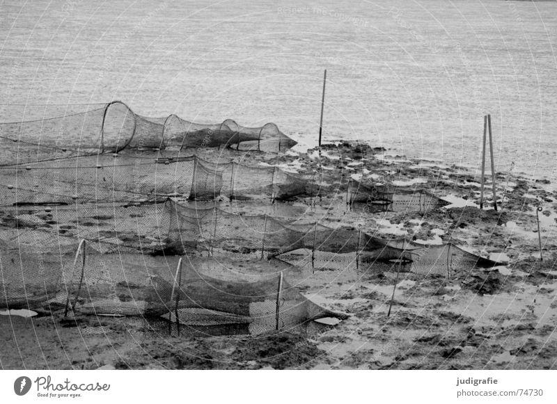 Wattlandschaft Wattenmeer Reuse rund Fischereiwirtschaft Schlamm Ebbe nass Meer salzig Jadebusen ruhig schwarz weiß grau trist Nordsee Netz Knoten dangast
