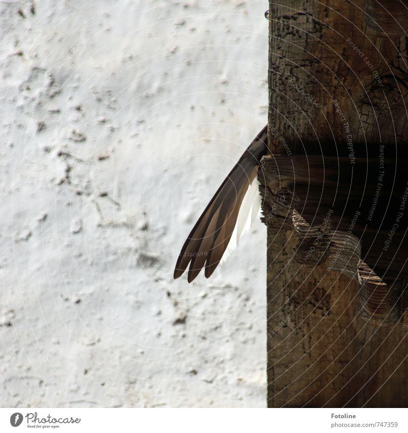Nicht die Flügel hängen lassen! Tier Vogel hell braun weiß Wand Feder Holz Balken Farbfoto Gedeckte Farben Außenaufnahme Detailaufnahme Menschenleer Tag Licht