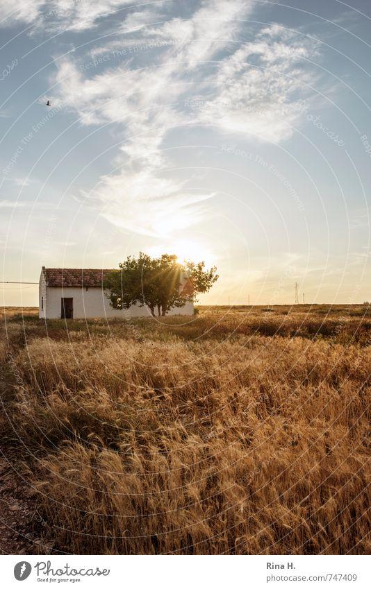 Spät Himmel blau Sommer Baum Wolken gelb Wärme Frühling Gebäude gehen Horizont Feld gold Idylle Lebensfreude Landwirtschaft