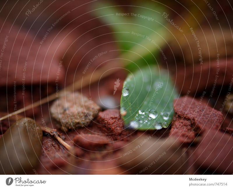 kugelrund (II) Umwelt Natur Pflanze Wasser Wassertropfen Sommer schlechtes Wetter Regen Gras Sträucher Blatt Grünpflanze Wildpflanze Wald liegen frisch kalt
