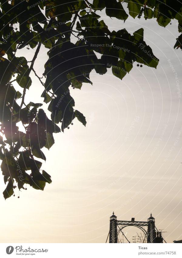Laubbrücke Natur Himmel Sonne blau ruhig Blatt Herbst Stimmung Brücke Romantik Frieden harmonisch Rest Gegend friedlich Region