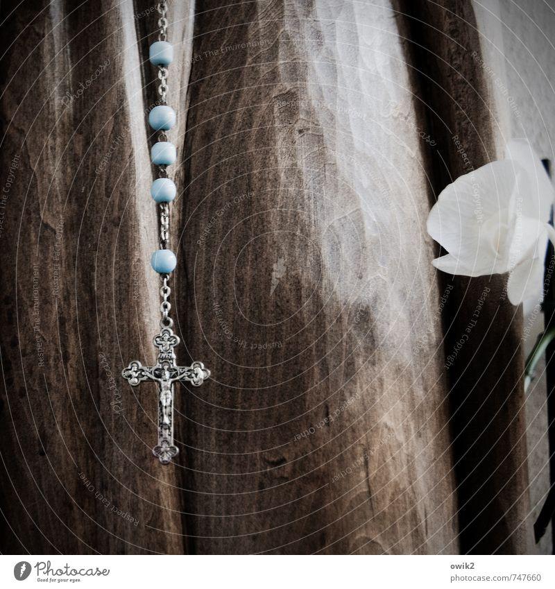 Magnificat anima mea Dominum Blume ruhig Liebe Blüte klein Holz Religion & Glaube Horizont Metall Glas einfach Blühend Zeichen dünn Vertrauen nah