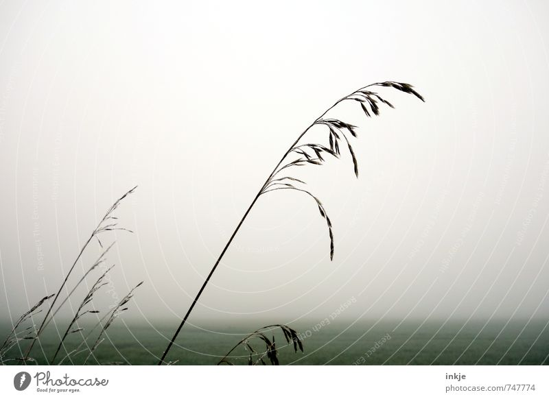 die Schönheit liegt in der Stille Himmel Natur grün weiß Einsamkeit Landschaft ruhig kalt Umwelt Herbst Frühling Gras grau Horizont Luft Wetter