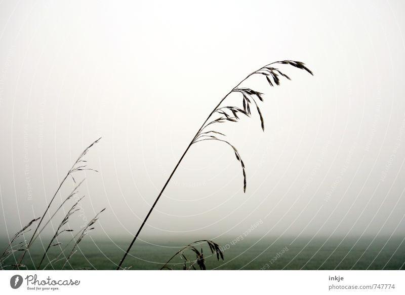 die Schönheit liegt in der Stille Umwelt Natur Landschaft Luft Himmel Frühling Herbst Klima Wetter schlechtes Wetter Nebel Gras Feld Feldrand kalt grau grün