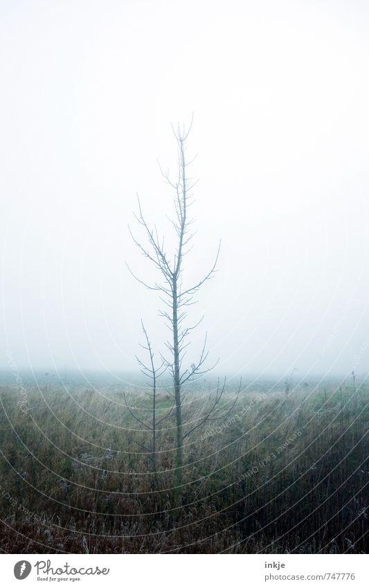 trististtrist Umwelt Natur Luft Himmel Frühling Herbst Winter Klima Wetter schlechtes Wetter Nebel Baum Wiese Wald Waldrand Feldrand dunkel dünn Gefühle