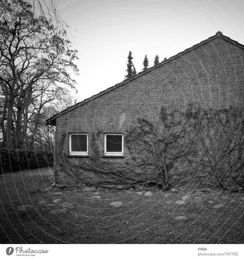 schöner Wohnen Frühling Herbst Baum Efeu Kletterpflanzen Garten Menschenleer Haus Einfamilienhaus Mauer Wand Fassade Fenster Backstein alt dunkel gruselig Natur