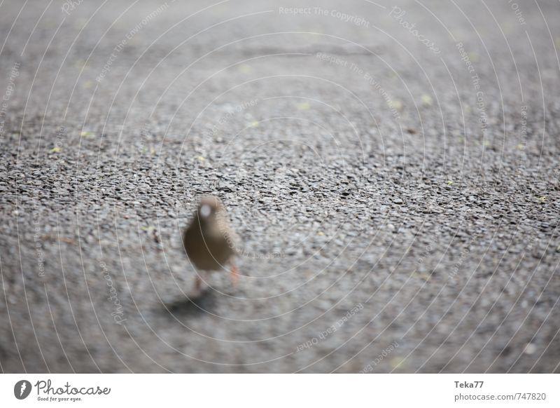 Vogelflucht Tier Wildtier ästhetisch Kreativität Flucht