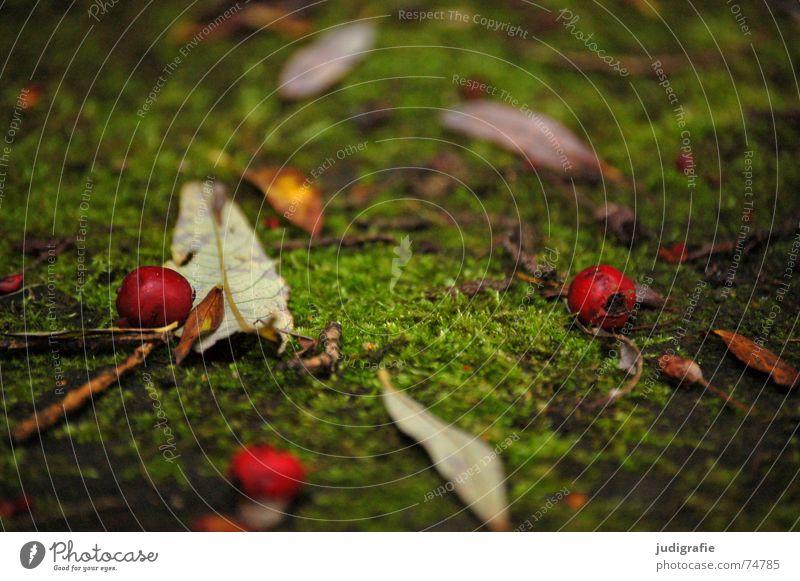Herbstlich Natur grün rot Blatt Farbe Tod Weide Beeren mögen herbstlich zuende