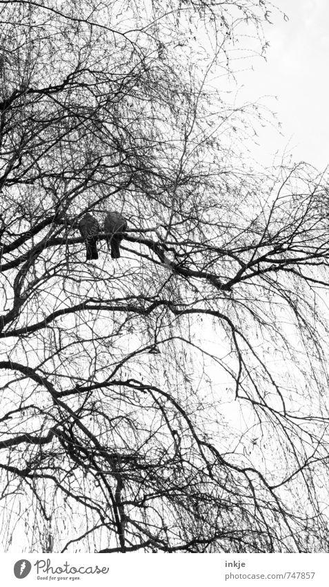 zusammen ist man weniger allein Natur Frühling Herbst Winter Baum Ast Baumkrone Geäst Park Wald Vogel Taube 2 Tier Erholung warten Zusammensein trist Gefühle