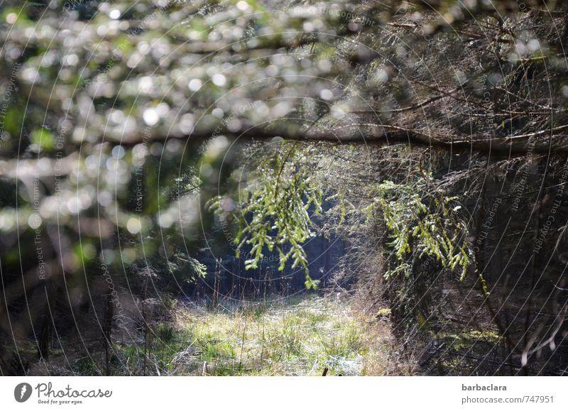 Wohlfühloase | Wald Natur Pflanze grün Baum Erholung Einsamkeit ruhig dunkel Umwelt hell Stimmung glänzend wild Zufriedenheit Sinnesorgane