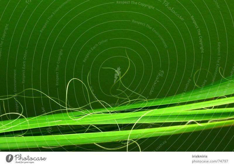 Linienführung Palmenwedel Pflanze grün durcheinander glänzend grasgrün trocken horizontal exotisch Zweig Natur Detailaufnahme Spitze Nähgarn