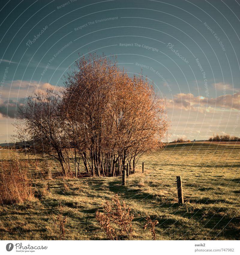 Holz mit Himmel Natur Pflanze Baum Landschaft Umwelt Traurigkeit Wiese Gras Holz Horizont Wetter Feld Wachstum Idylle Textfreiraum Sträucher