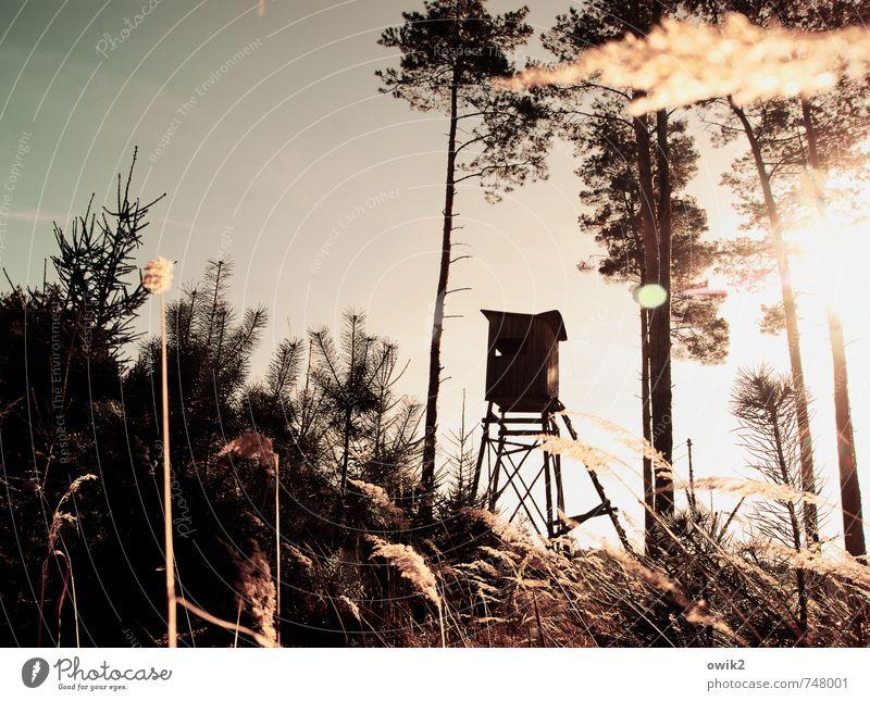 Kugellager Freizeit & Hobby Jagd Arbeitsplatz Umwelt Natur Landschaft Pflanze Wolkenloser Himmel Schönes Wetter Baum Gras Sträucher Wildpflanze Nadelwald Wald