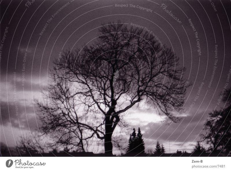 n' Baum... Morgen Sonnenaufgang Natur Morgendämmerung Schwarzweißfoto