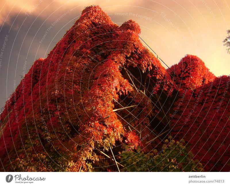 Roter Oktober Himmel Sonne blau rot Blatt Haus Wolken Herbst Baugerüst Herbstlaub Russland Traumprinz Indian Summer Aurora Dornröschen St. Petersburg