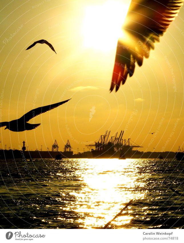 Hamburg, meine Perle... Kran Wellen Reflexion & Spiegelung Möwe Sonnenuntergang Abenddämmerung Abschied Ferne Einsamkeit Zusammensein Hafen Anlegestelle Elbe