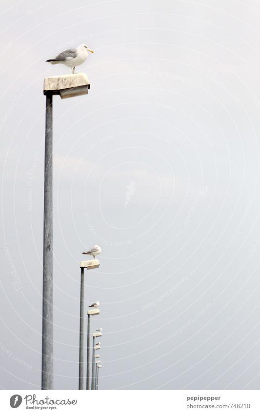 i i iii Himmel Ferien & Urlaub & Reisen Meer Einsamkeit ruhig Ferne Küste Freiheit Linie Lampe Horizont Zusammensein warten beobachten Tiergruppe Neugier