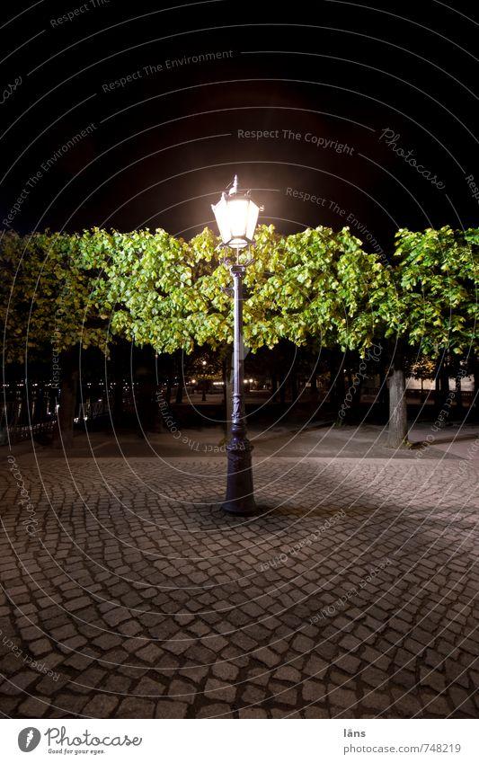 Nachtwache Brühlsche Terrasse Dresden Abend Laterne Straßenbeleuchtung Pflastersteine Kopfsteinpflaster Beleuchtung Baum