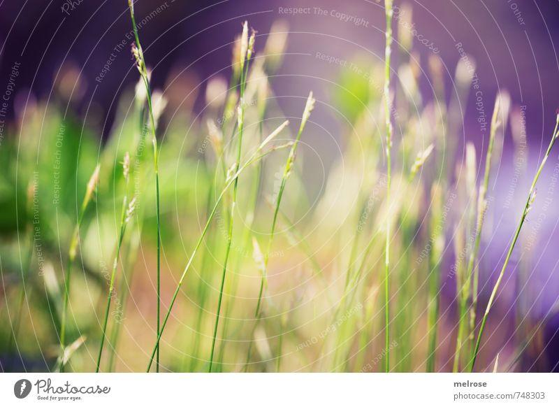 Ruhepause Natur Landschaft Pflanze Frühling Gras Moos Farn Grünpflanze Waldboden Menschenleer berühren entdecken Erholung gelb grün Lebensfreude